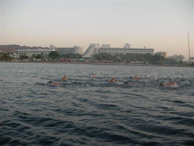 שחייה באילת